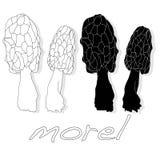 morel, yellow morel, true morel and sponge morel - edible mushrooms vector illustration