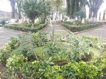 Morelia green garden. Local garden in Morelia city Stock Photography