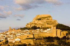 Morella Stock Photo
