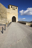Morella Royalty Free Stock Images