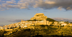 Morella Royalty Free Stock Image