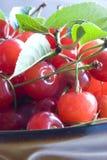 Morello cherries Stock Image