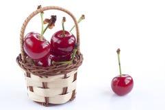 Morello cherry basket Stock Photography