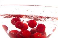 Morello cherry bowl Royalty Free Stock Images