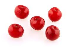 Morello cherry grid Royalty Free Stock Photos