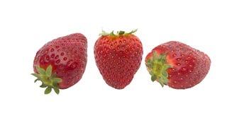 Morelowa owoc Zdjęcia Stock
