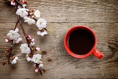 Morelowi wiosna kwiaty, filiżanka i fotografia stock