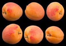 Morelowy owocowy zbliżenie na plecy Zdjęcia Stock