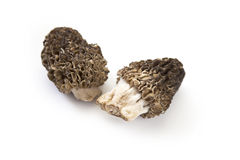 Morels Royalty Free Stock Photos