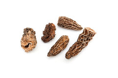 Morels dried closeup Royalty Free Stock Image