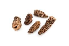 Morels dried closeup Royalty Free Stock Image