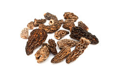 Morels dried closeup Stock Images