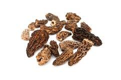 Morels dried closeup Stock Images