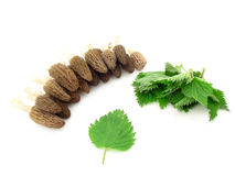 Morels and nettles. Morel mushrooms and nettles leaves isolated over white royalty free stock photo