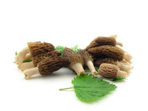 Morels and nettles. Morel mushrooms and nettles leaves isolated over white royalty free stock images