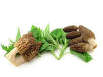 Morels and nettles Royalty Free Stock Photography