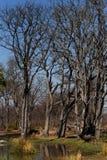 Moremi game reserve landscape Royalty Free Stock Photo
