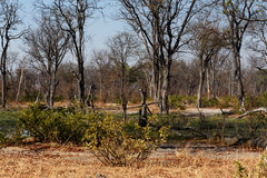 Moremi game reserve landscape Stock Photo