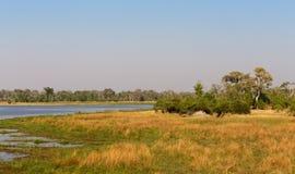 Moremi game reserve, Okavango delta, Africa Botswana Royalty Free Stock Photo