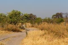 Moremi game reserve, Okavango delta, Africa Botswana Stock Images