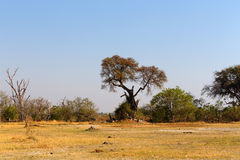 Moremi game reserve, Okavango delta, Africa Botswana Royalty Free Stock Photos