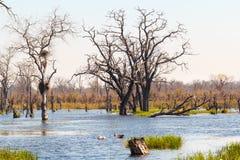 Moremi game reserve, Okavango delta, Botswana Africa Stock Photo