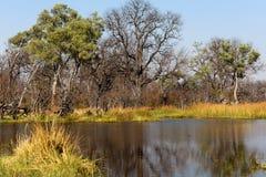 Moremi game reserve, Okavango delta, Botswana Africa Stock Images