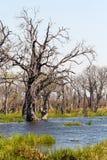 Moremi game reserve, Okavango delta, Botswana Africa Stock Image