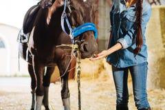 Morena com trança longa e os pregos vermelhos que alimentam o cavalo imagens de stock royalty free