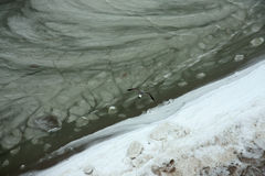 Morenm di freddo di Aiki del gabbiano dell'uccello Fotografie Stock