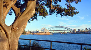 Moreton Bay Fig Tree frames Opera House & Harbour Bridge Stock Photo