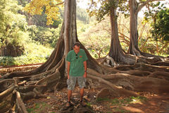 Moreton Bay Fig Trees. These gigantic trees with their extensive roots, above ground, dwarf this tourist guide as he explains the history of Allerton Gardens in Royalty Free Stock Image