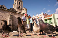 Morföräldrar och matande duvor för sonson på semestrar i Kuba Arkivbilder