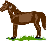 Morgan Horse Lizenzfreie Stockfotografie