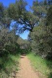 Morgan Trail lizenzfreies stockbild