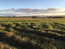 Morgen am Ackerland Stockbilder