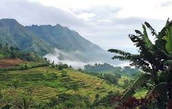 Morgen-Ansicht an den Kiangan-Reis-Terrassen lizenzfreies stockbild