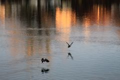 Morgen auf dem See Wolfsburg, Deutschland lizenzfreie stockbilder