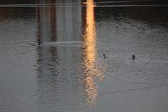 Morgen auf dem See Wolfsburg, Deutschland lizenzfreies stockfoto