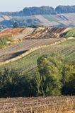 Morgen in der Landschaft, Felder, vertikal Stockbilder