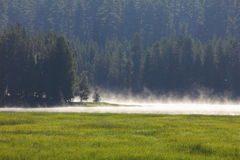 Morgen am Deschutes staatlichen Wald Stockbilder