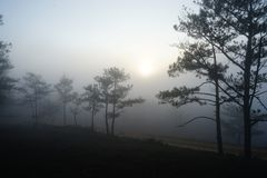 Morgen in einem Kieferwald stockfotos