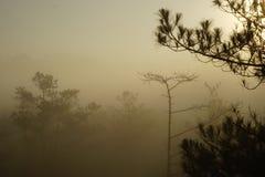 Morgen in einem Kieferwald lizenzfreie stockfotografie