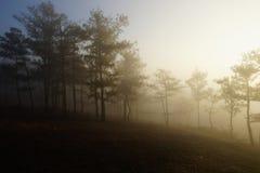 Morgen in einem Kieferwald lizenzfreie stockfotos