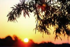 Morgen-Farbe stockfoto