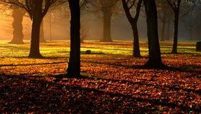 Morgen-Glühen Stockbilder