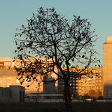 Morgen-Herbst Lizenzfreie Stockbilder