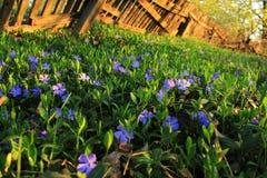 Morgen im Garten Stockbild