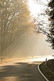 Morgen im Herbst stockfotografie