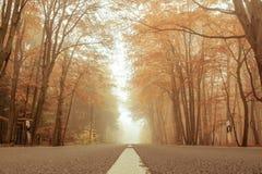 Morgen im Herbst Rote fallende Blätter auf grünem Gras Lizenzfreies Stockfoto